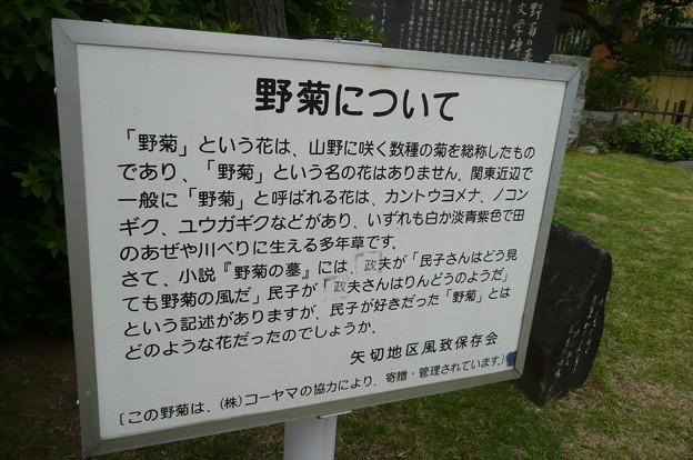 P1130151野菊について2)