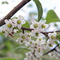 Photos: 団体で咲くと綺麗でしょう???