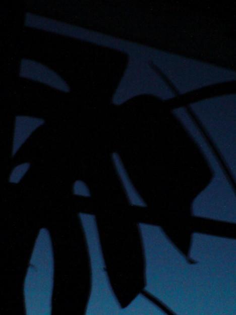 暗闇に浮かぶモンステラ