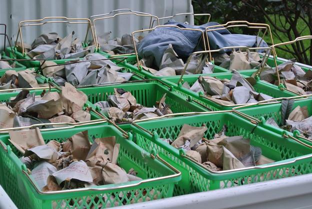 Photos: 軽トラの収穫びわ運搬