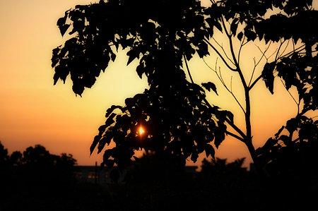葉の隙間から望む夕日!
