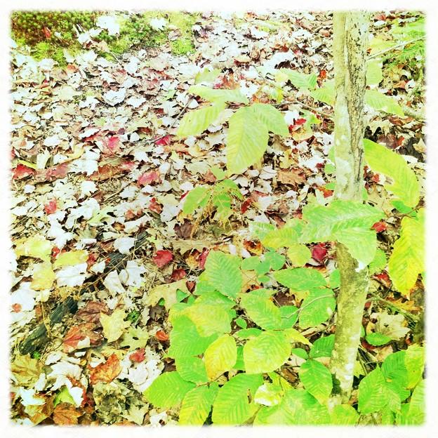 写真: Red, Brown and Green