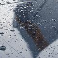 Rain on the Wing
