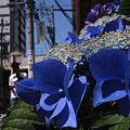 Photos: 花の姿 (11) 2012年 6月