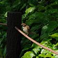 鳥の景色 (6) 2011年 5月 木漏れ日
