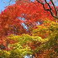 京都2007.常寂光寺5