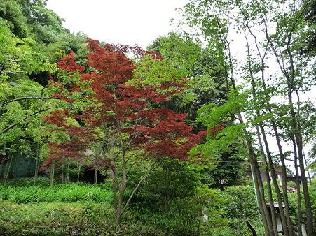 090612-海蔵寺 (3)
