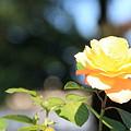 平和公園・薔薇05-11.10.20