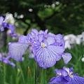 フラワーガーデン&紫陽花祭り【6月14日】