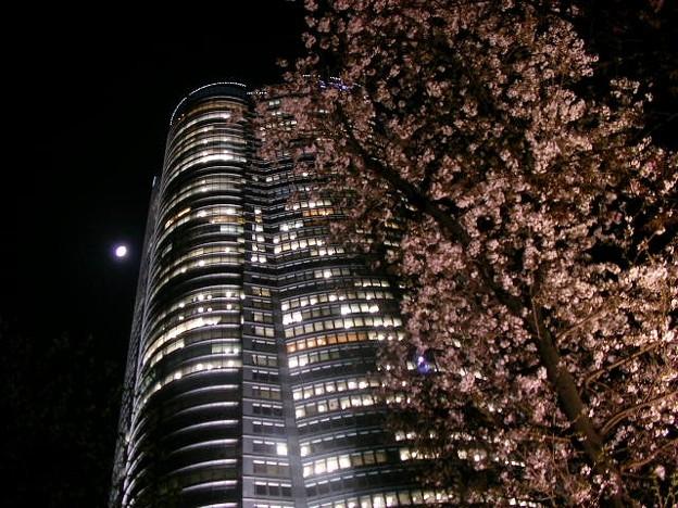 Photos: 070329sakura2