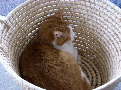 トラミちゃん洗濯かごをかなり気に入る。