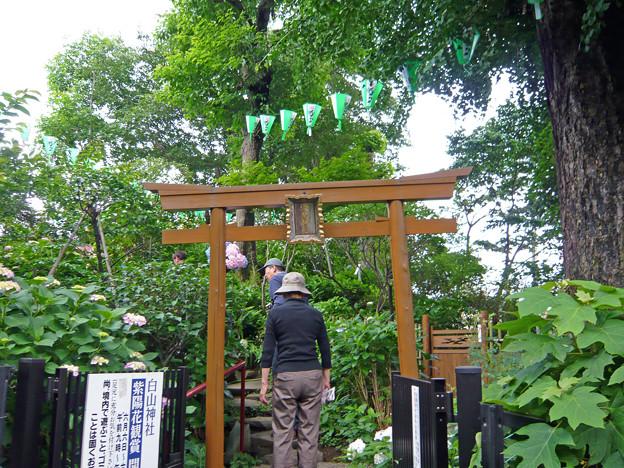 Photos: 文京あじさいまつり - 018