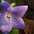 Photos: flower2 5637