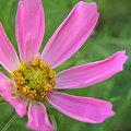Photos: flower2 5694
