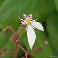 写真: 201105flower 197
