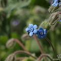 写真: 201105flower 204