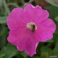 写真: 201105flower 213