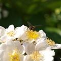 写真: 201105flower 216