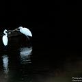 写真: 鷺