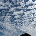 うろこ雲~♪