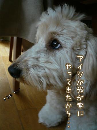 くーかいの憂鬱 4