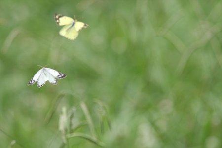 2009.07.18 四季の森 舞う蝶