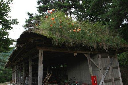 2009.08.12 遠野 曲り屋 納屋の上は花盛り