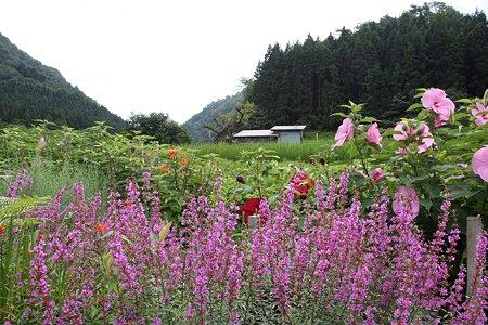 2009.08.15 山北町 雷 花咲く田圃