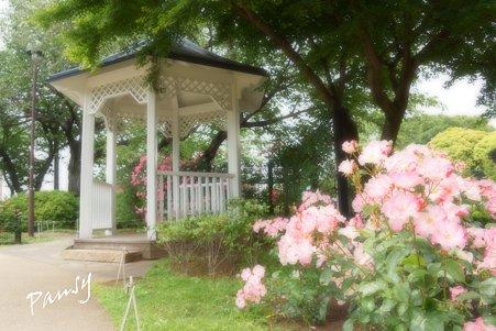 rose garden..6