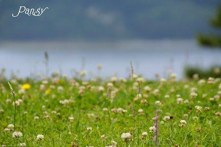 潮の香りがする野原・・