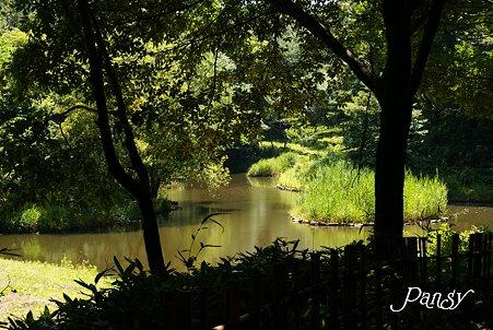 夏の池・・