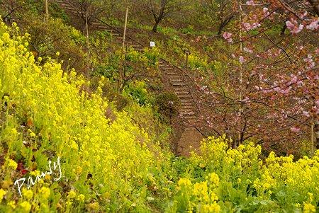 あぐりパークの散歩道 松田山 12