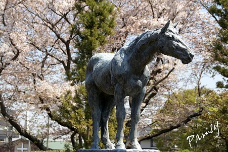 桜景色・・15