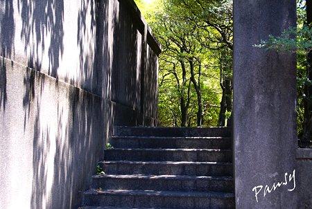 木漏れ日の階段・・