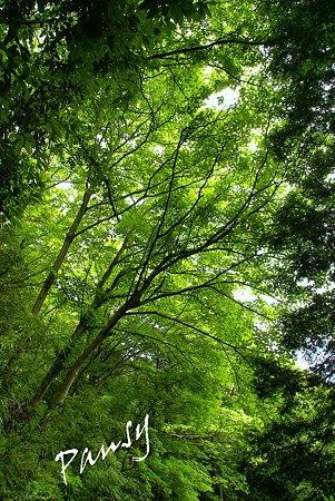 森の緑・・長興山紹太寺史跡さんぽ~24