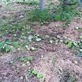 写真: RIMG0878摘果りんご サイズ変更
