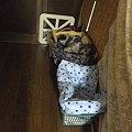 Photos: 一、応犬