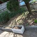 Photos: 荒れ果てていた花壇を清掃