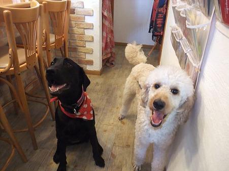 2頭の看板犬誕生!