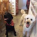 Photos: 2頭の看板犬誕生!