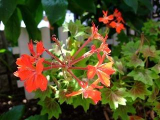 2009_0614庭の花0009