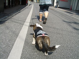 2009_0607錦帯橋及び港公園及び0102