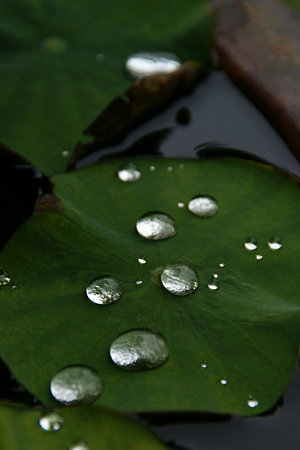雨の名残り!(05/30)