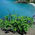 Photos: 紫の花が咲いてた。