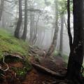 Photos: プチ富士登山1