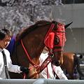Photos: Sakura Belle