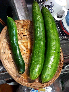 Summer Dream 36- 菜園で採れた新鮮野菜