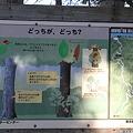 Photos: 110131-113どっちが、どっち?