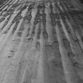 写真: 雨の行軍