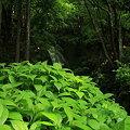 Photos: 緑の象徴